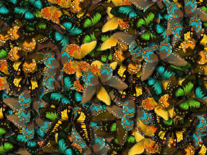 butterflybackground.jpg